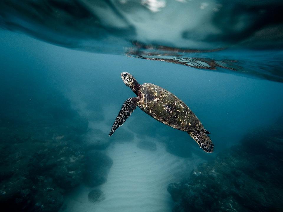 Канал BBC Earth представил серию десятичасовых роликов со съемками океана