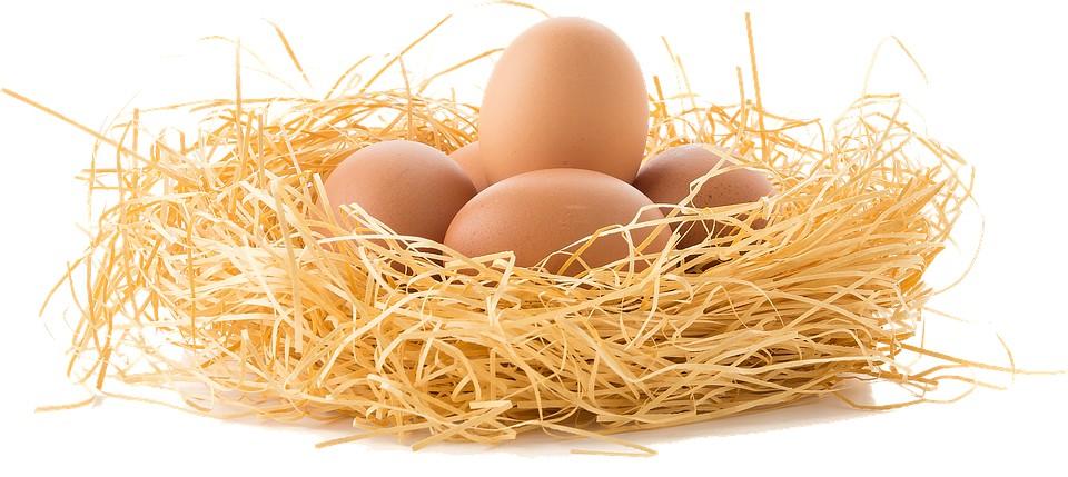Новое исследование о влиянии употребления яиц на сердечно-сосудистые заболевания у человека