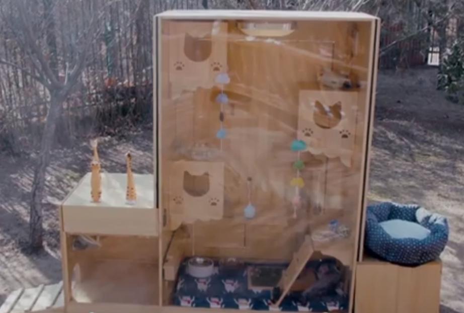 Программист в Китае построил домик для кошек с распознаванием морд