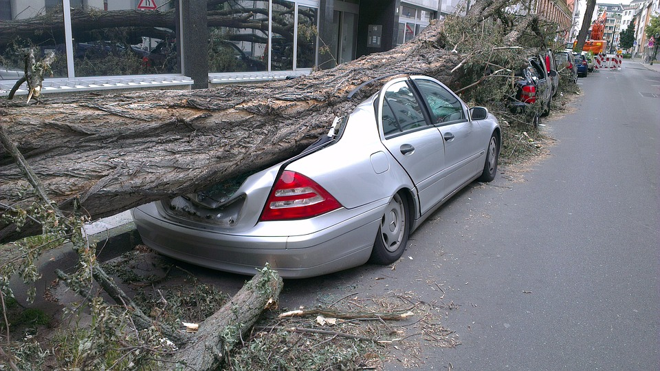 ВС РФ: Кто должен отвечать, если на машину во дворе упало дерево