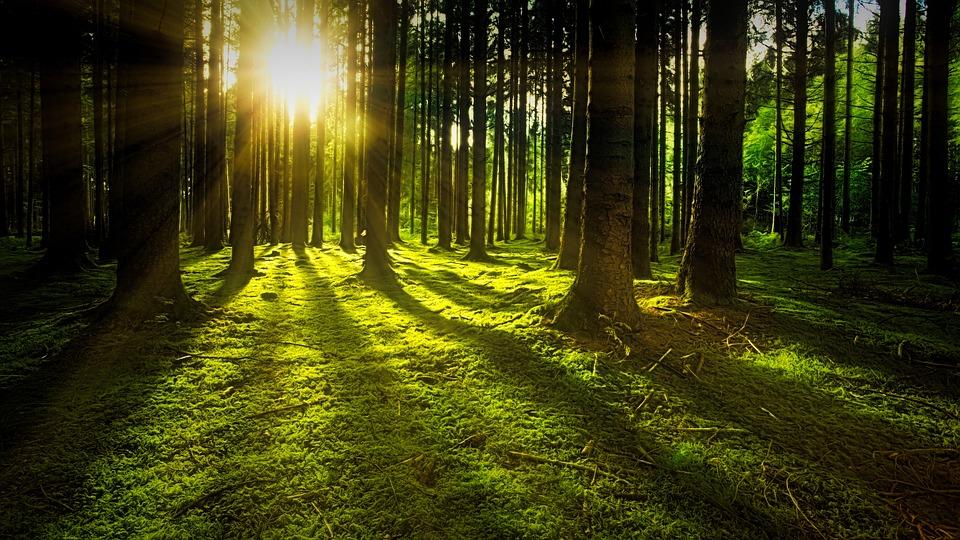 5,56 миллиона гектаров леса потеряла Россия в 2018 году