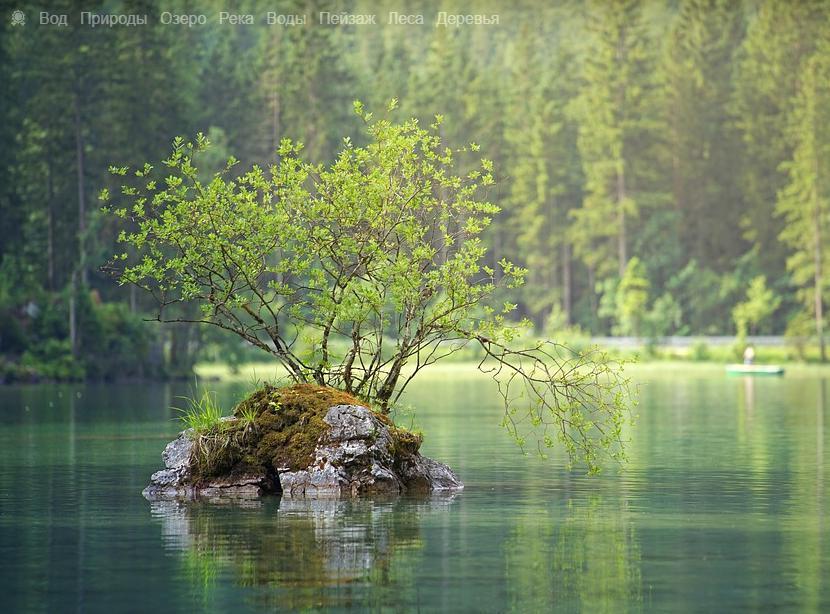 Россия имеет большую площадь лесов на своей территории из всех стран мира (видео)