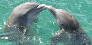 Количество дельфинов, которых содержат в неволе в разных странах