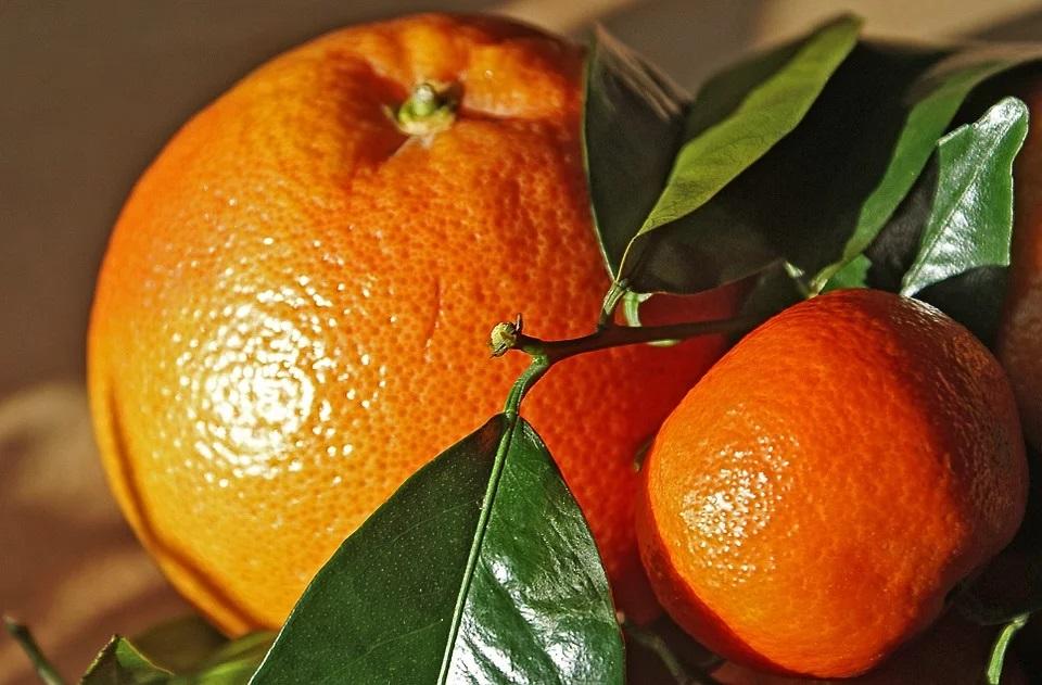 Мандарины и апельсины: чем они отличаются?