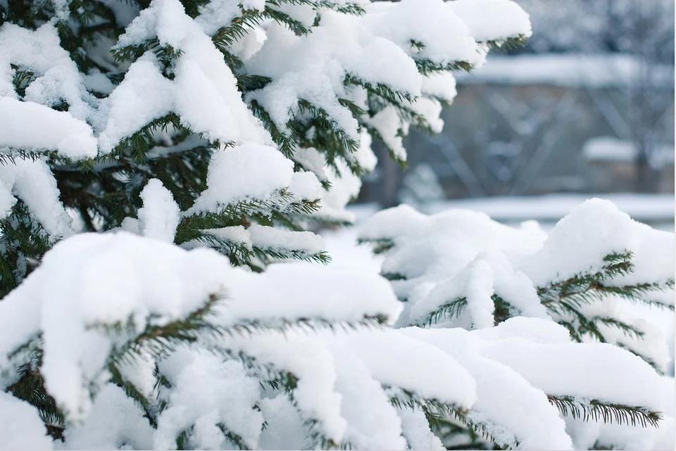 Главы шести регионов России объявили 31 декабря выходным