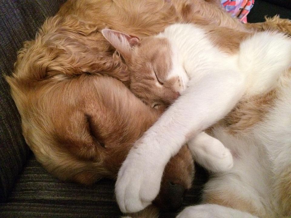 Собаки и кошки, живущие вместе, хорошо уживаются
