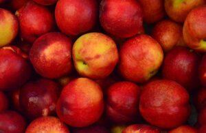 Натуральные соединения яблока поддерживают нейрогенез и могут улучшить работу мозга