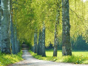 Глобальное потепление вредит аллергикам. Сезон пыльцы удлиняется