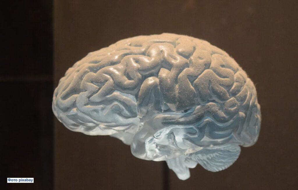 Норвежские ученые оценили, влияет ли уровень образования на скорость уменьшения мозга с возрастом