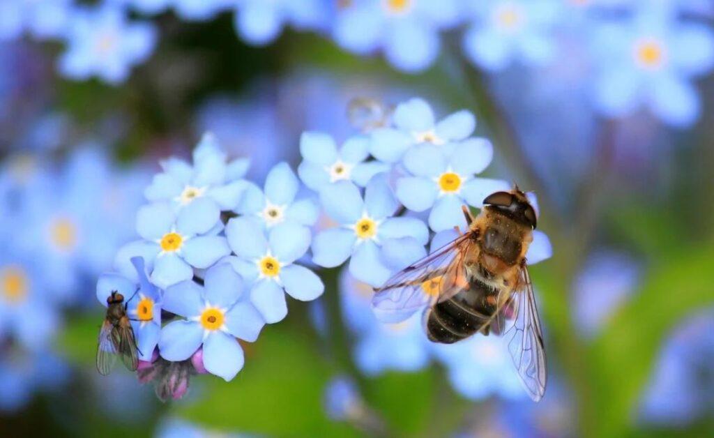 Почему пчелы так важны для окружающей среды?